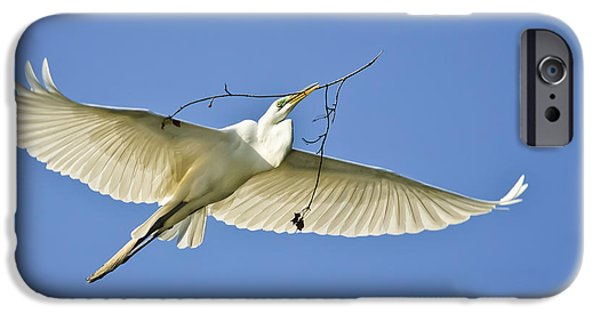 Flight iPhone Cases - Great Egret with Nesting Material iPhone Case by Timothy Flanigan