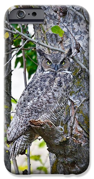 Great Horned Owl iPhone Case by Athena Mckinzie