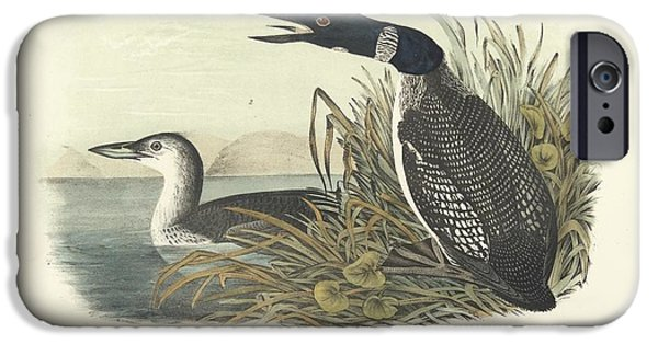 Ducks iPhone Cases - Great North Diver Loon iPhone Case by John James Audubon