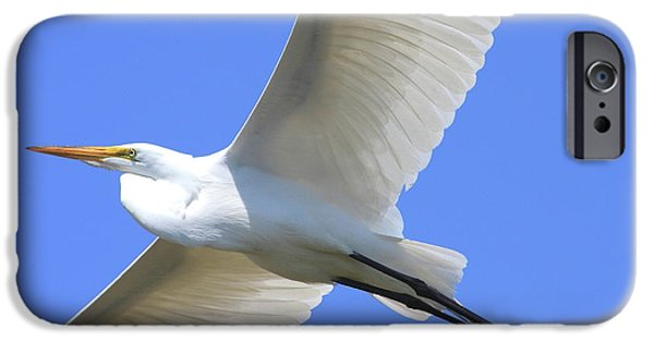Bird In Flight iPhone Cases - Great White Egret In Flight . 40D6850 iPhone Case by Wingsdomain Art and Photography