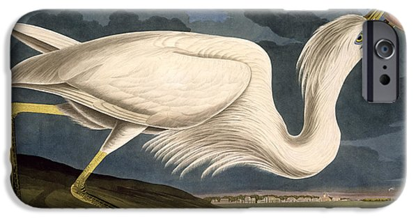 Male Drawings iPhone Cases - Great White Heron iPhone Case by John James Audubon