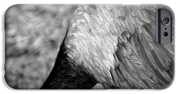 Smithsonian iPhone Cases - Greater Rhea iPhone Case by Peter Duffy