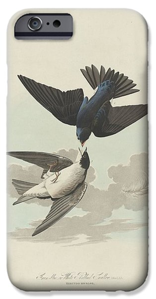 Swallow iPhone Cases - Green-Blue or White-Bellied Swallow iPhone Case by John James Audubon