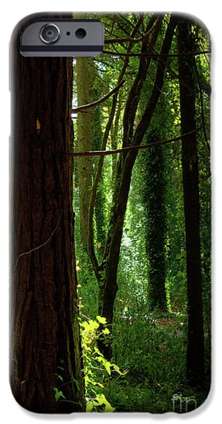 Fall Scenes iPhone Cases - Green Forest iPhone Case by Carlos Caetano