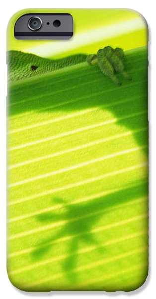 Green Lizard iPhone Case by Bill Brennan - Printscapes