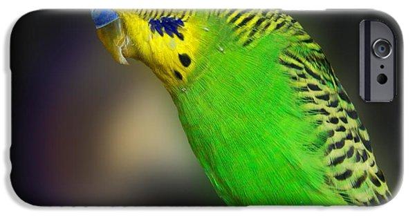 Parakeet iPhone Cases - Green Parakeet Portrait iPhone Case by Jai Johnson