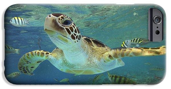 Nobody Photographs iPhone Cases - Green Sea Turtle Chelonia Mydas iPhone Case by Tim Fitzharris