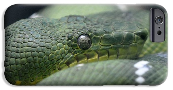 Serpent iPhone Cases - Green Snake iPhone Case by Dot Lestar Roberts