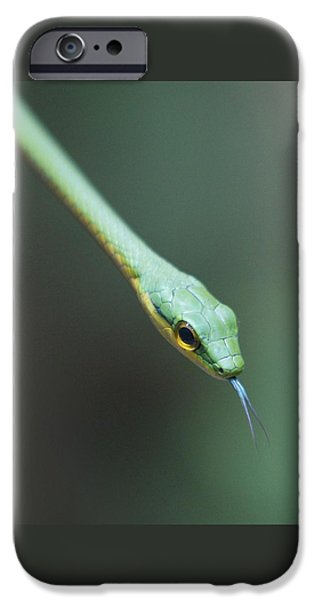 Serpent iPhone Cases - Green Tree Snake iPhone Case by Paul Wegner