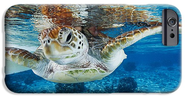 21st Century iPhone Cases - Green Turtle iPhone Case by Alexis Rosenfeld