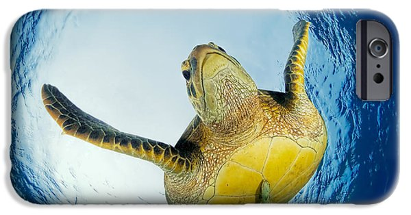 Marine iPhone Cases - Green Turtle Just Below Surface iPhone Case by Henry Jager