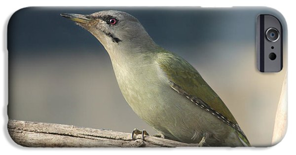 Animal Picture iPhone Cases - Green Woodpecker iPhone Case by Heike Hultsch