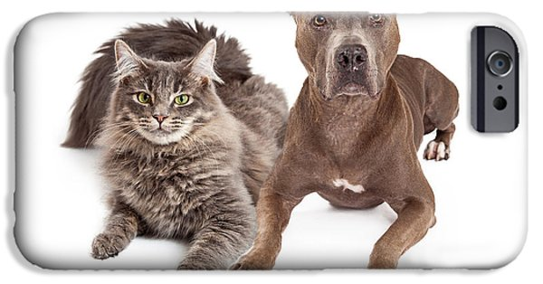 Domestic Animal iPhone Cases - Grey Cat and Dog Laying Together iPhone Case by Susan  Schmitz