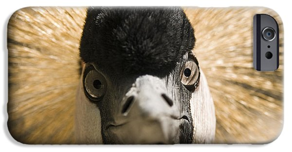 Close Photographs iPhone Cases - Grey Crowned Crane iPhone Case by Chad Davis