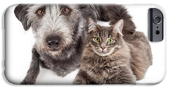 Domestic Animal iPhone Cases - Grey Dog and Cat Laying Closely Together iPhone Case by Susan  Schmitz