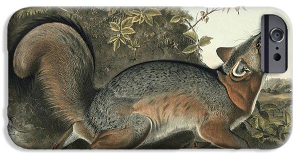 Fox Paintings iPhone Cases - Grey Fox iPhone Case by John James Audubon