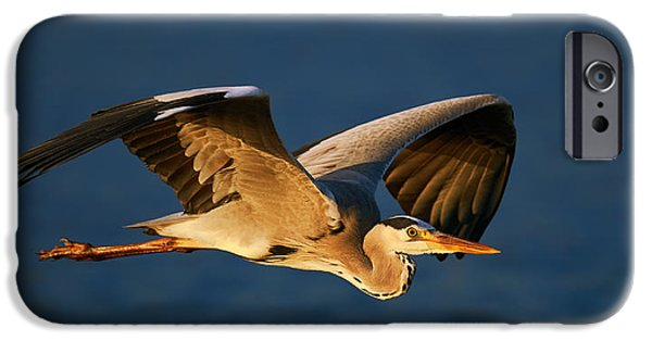 One iPhone Cases - Grey heron in flight iPhone Case by Johan Swanepoel