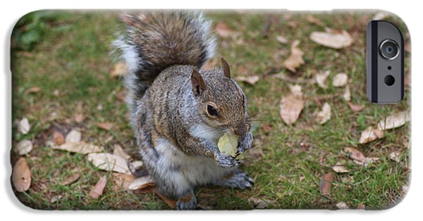 Chip iPhone Cases - Grey Squirrel Eating Chips iPhone Case by Rumyana Whitcher