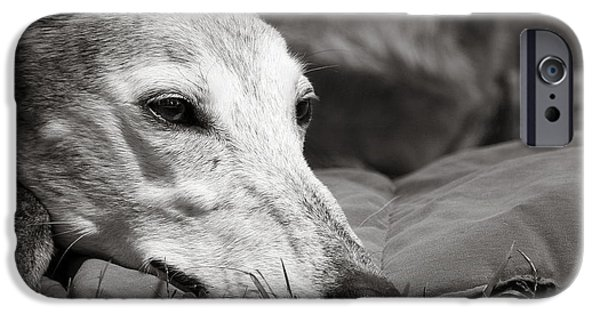 Rescued Greyhound iPhone Cases - Greyful iPhone Case by Angela Rath