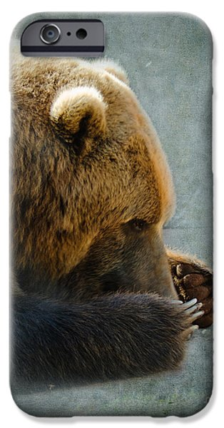 Slumber iPhone Cases - Grizzly Bear Lying Down iPhone Case by Betty LaRue
