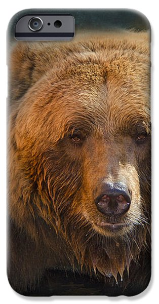 Grizzly Bear Portrait iPhone Case by Betty LaRue