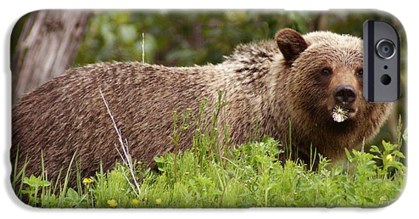 Freedom iPhone Cases - Grizzly With A Dandelion iPhone Case by Stanza Widen