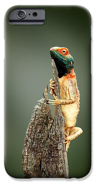 Ground iPhone Cases - Ground agama sunbathing iPhone Case by Johan Swanepoel