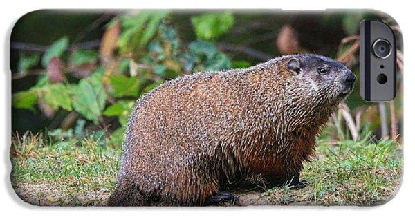 Groundhog iPhone Cases - Groundhog  0590 iPhone Case by Jack Schultz