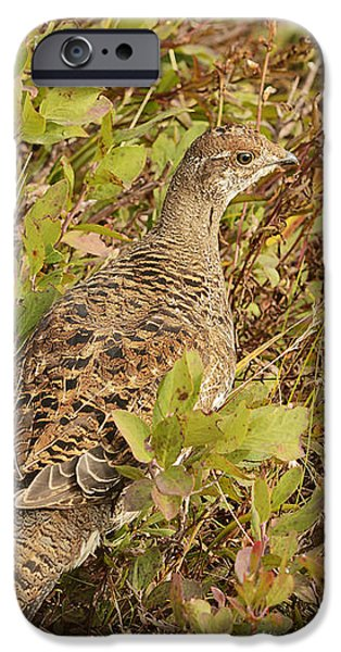 Rainy Day iPhone Cases - Grouse iPhone Case by Marv Vandehey