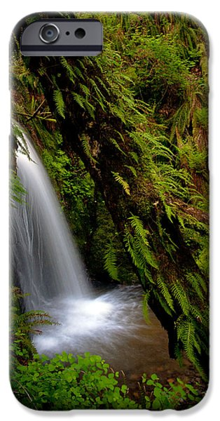 North Cascades iPhone Cases - Grove of Life iPhone Case by Mike Reid