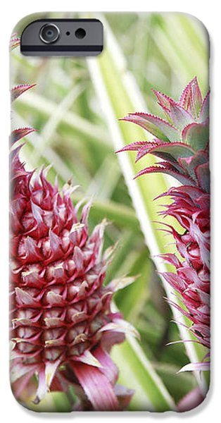 Growing Red Pineapples iPhone Case by Brandon Tabiolo - Printscapes