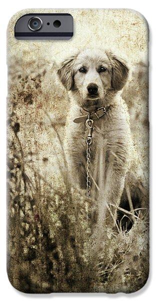 Grunge Puppy iPhone Case by Meirion Matthias