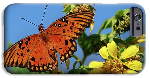 Buterfly iPhone Cases - Gulf Fritillary Butterfly iPhone Case by Skip Willits