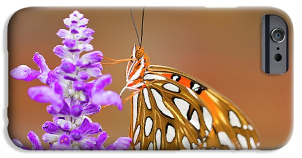 Hershey iPhone Cases - Gulf Fritillary iPhone Case by Shelley Neff