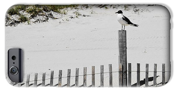 White House iPhone Cases - Gull at Island Beach iPhone Case by Colleen Kammerer