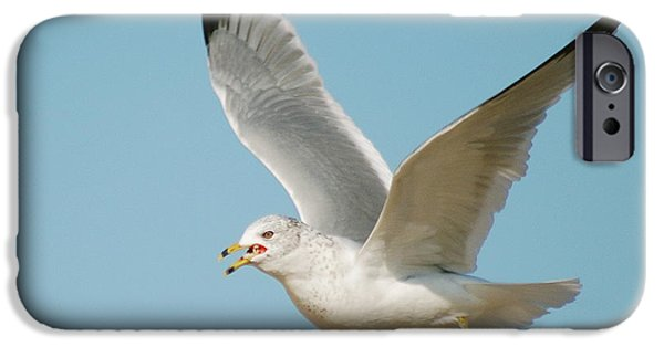 Flying Seagull iPhone Cases - Gull iPhone Case by Michael Peychich