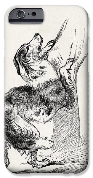 Animal Drawings iPhone Cases - Half Bred Shepherd Dog Caressing His iPhone Case by Ken Welsh