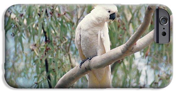 Whitsunday iPhone Cases - Hamilton Island Cockatoo iPhone Case by Vicki Ferrari