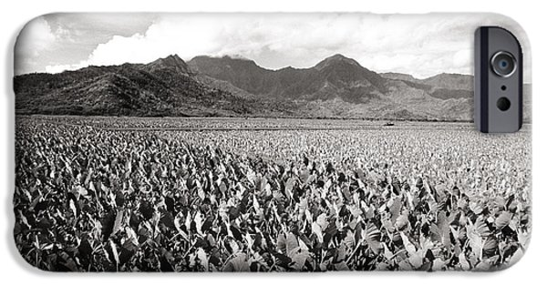 Reflection Harvest iPhone Cases - Hanalei Taro Fields iPhone Case by Bob Abraham - Printscapes