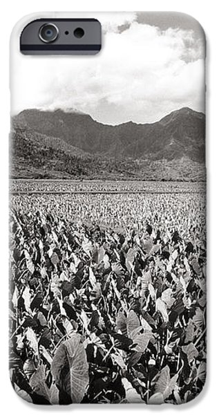 Hanalei Taro Fields iPhone Case by Bob Abraham - Printscapes