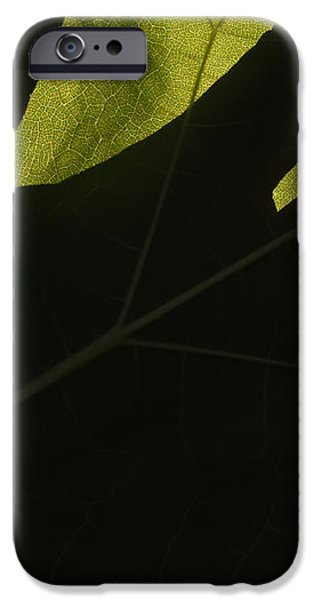 Hand and Catalpa Veins Backlit iPhone Case by Anna Lisa Yoder