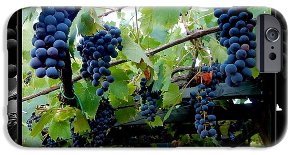 Crops iPhone Cases - Hanging Grapes iPhone Case by Dorothy Berry-Lound