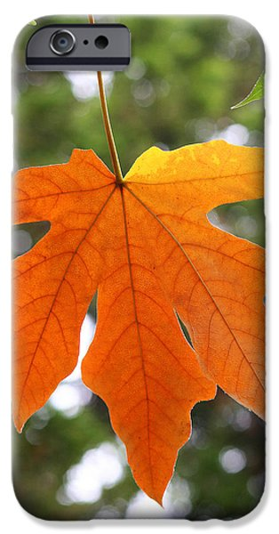 Fall iPhone Cases - Hanging Leaf in Fall iPhone Case by Art Block Collections
