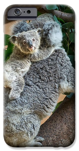 Koala iPhone Cases - Hanging On iPhone Case by Jamie Pham