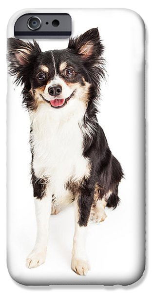 Mixed Breed iPhone Cases - Happy Chihuahua Mixed Breed Dog Sitting iPhone Case by Susan  Schmitz