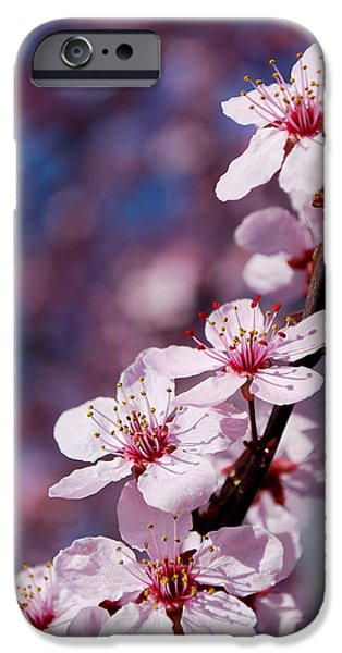 Becky Photographs iPhone Cases - #happyfirstdayofspring iPhone Case by Becky Furgason