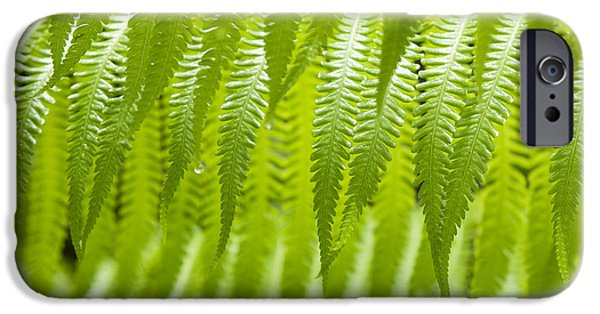 Cibotium iPhone Cases - Hapuu Fern Detail iPhone Case by Charmian Vistaunet