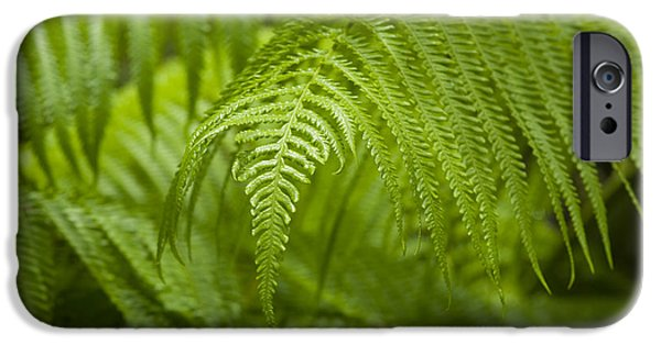 Cibotium iPhone Cases - Hapuu Tree Ferns iPhone Case by Charmian Vistaunet