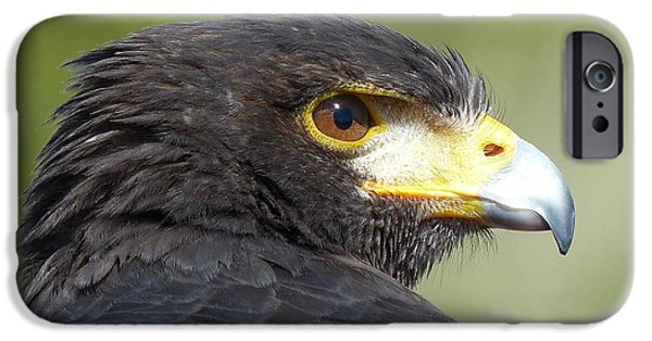 Decor Ceramics iPhone Cases - Harris Hawk iPhone Case by Lena Kouneva