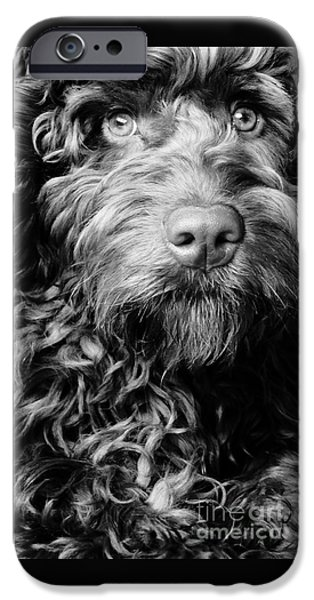 Cute Puppy iPhone Cases - Harry iPhone Case by Pete Edmunds